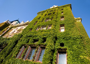 Eco-friendly Green Hotel